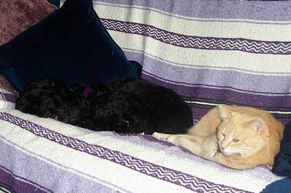 Teddy and Mitsy - May 06_0001