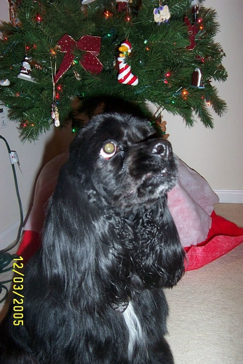Teddy christmas