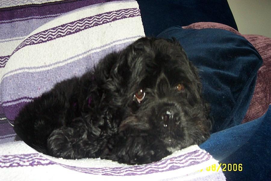 Teddy hi mom- May 06_0004