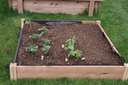 Our First garden